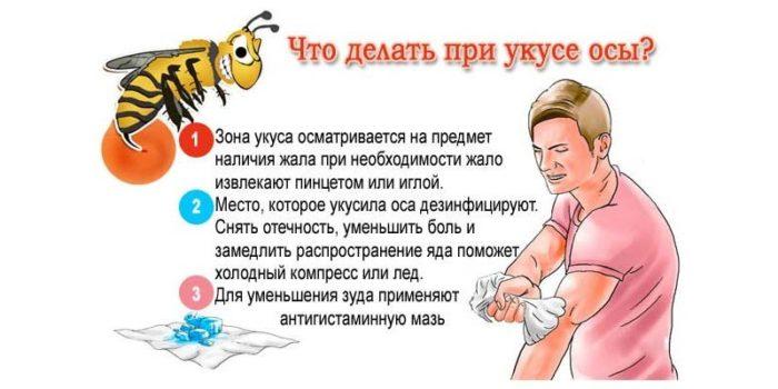 Что делать при укусе осы.jpg