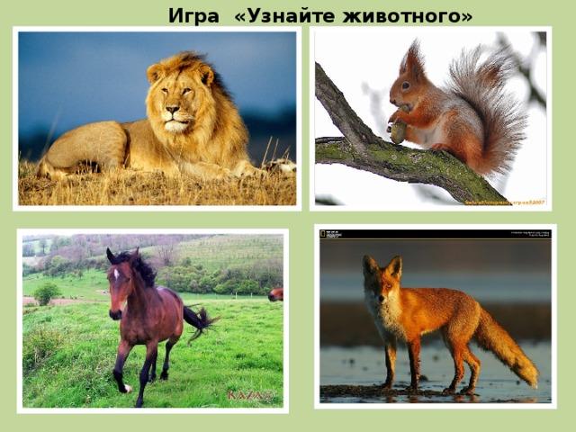 Угадай животного - викторина