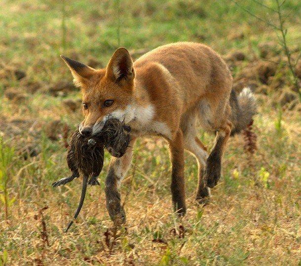 Викторина о животных - дидактические пособия