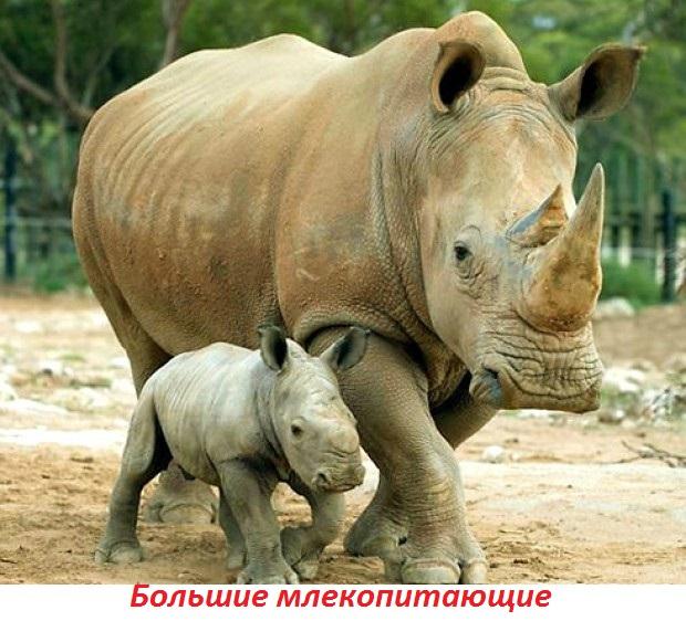 Викторина о животных - наглядные пособия