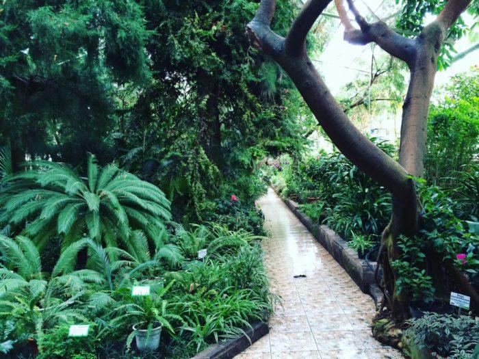 Парк Лесоводов и Ботаничекий сад