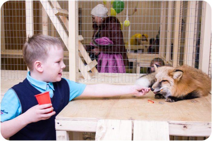 Мини-зоопарк «Ребятам о зверятах»