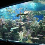okeanarium-akvagalereya
