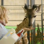 tyumenskij-zoopark