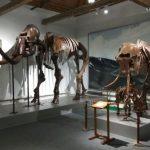 muzej-prirody-i-ohrany-okruzhayushchej-sredy