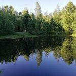 park-kedrovyj-log