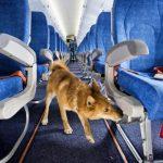 aeroflot-objavil-o-novyh-pravilah-perevozki-zhivotnyh-966c185