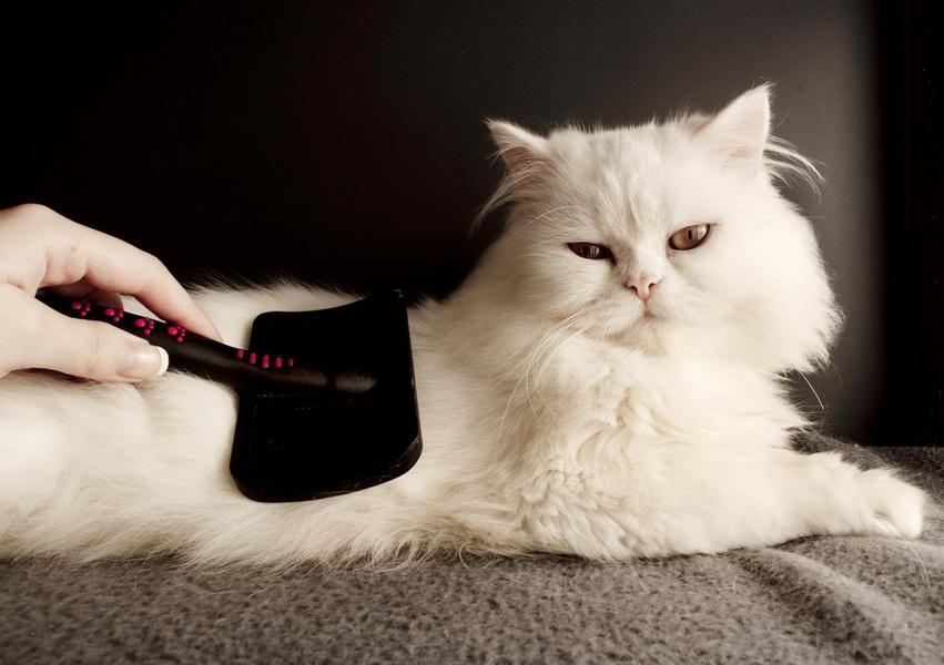 Зачем расчесывать кота?
