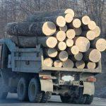 v-primore-vyjavili-krupnuju-kontrabandu-lesa-v-kitaj-228454b