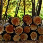 novye-pravila-ispolzovanija-zemel-lesnogo-fonda-vveli-v-rossii-4d440f2